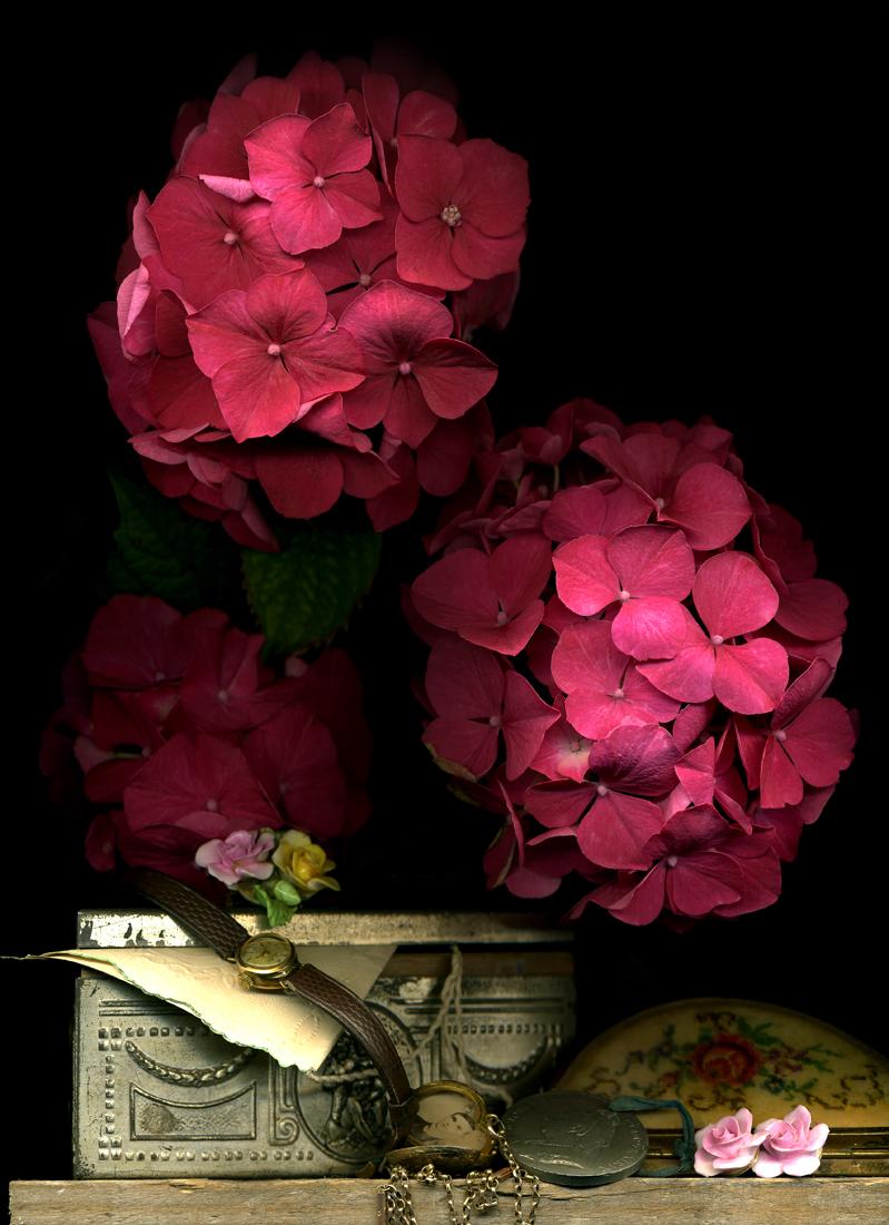 Hydranger Pink1