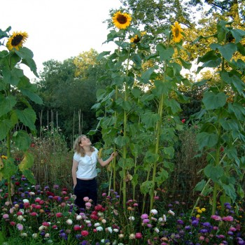 Laura and Sunflower