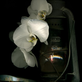 Orchid and Lamp2a